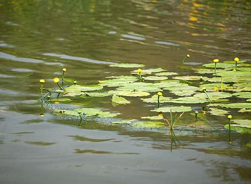 очистка воды в пруду