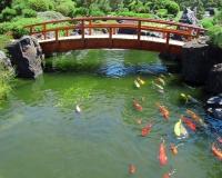Подготовка пруда к разведению рыб