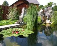 Обустраиваем садовый пруд