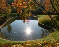 цветение воды в пруду